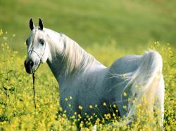 White horse nature field horses animals 1600x1200