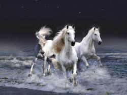 Horses White Horse ♡