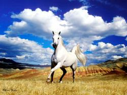 The Most Beautiful White Horse In The World 07