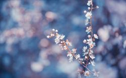 Branches Flowers White Macro HD Wallpaper