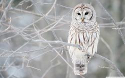 ... x 1600 Original. Description: Download White Owl HD ...