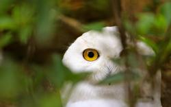 White owl watching