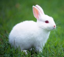 FunMozar – White Rabbit WHITE RABBIT | Going To Hanoi