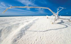... White Sand Background ...