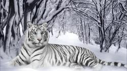 White Tigerfree widescreen
