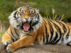 Wild Animal HD Wallpapers (3)