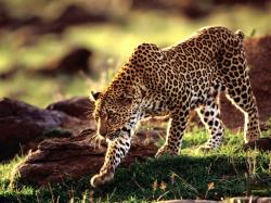 Desktop free pictures of wild animals wallpaper