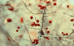Berries Macro Nature