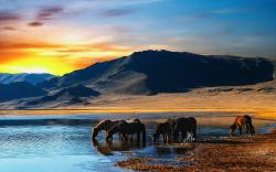 Wild Horses Lake