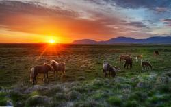 Wild horses sunset
