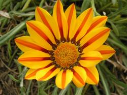 Desktop backgrounds · Animal Life · Flowers Wildflower