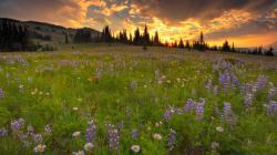... Lovely Wildflower Meadow Wallpaper ...