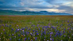 ... Wildflower Meadow Wallpaper ...