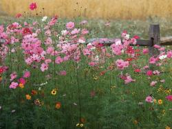 Wild Flower Images