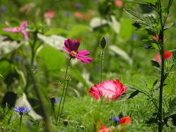 This week we got some beautiful photos from Larry Musil in northern Illinois. He writes he's been planting wildflowers for 20 years, and he is obviously not ...