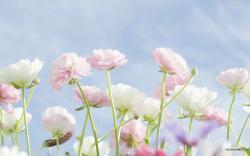 Wild Flower White Wallpaper