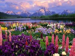 http://pandasthumb.org/images/wildflowers.jpg