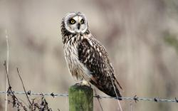Wildlife Bird Owl Nature