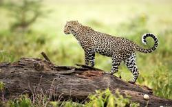 Wildlife HD Wallpapers Free Download