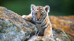 Adorable Wildlife Pictures