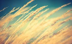 Wind Wallpaper