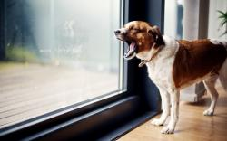 Home Window Dog Photo Wallpaper