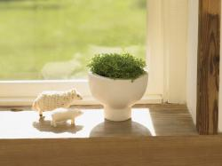 HD Wallpapers Green windowsill