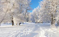 Winter Season Nature Wallpaper