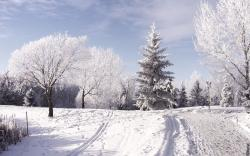 Winter Beautiful Wallpaper