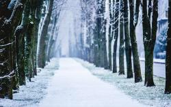 Winter snow trees alley