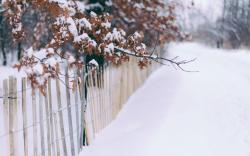 Winter Snow Trees Leaves Fence
