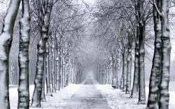 trees park winter snow trail wallpaper background