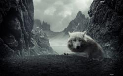 HD Wallpaper   Background ID:102853. 2560x1600 Animal Wolf