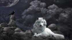 HD Wallpaper | Background ID:125502. 1920x1080 Animal Wolf
