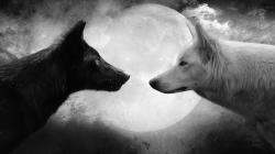 HD Wallpaper | Background ID:321139. 1920x1080 Animal Wolf