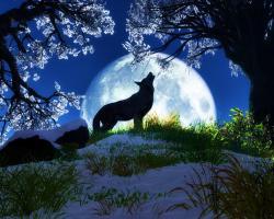 wolves - wolves Wallpaper