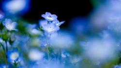 Beautiful Blue Flowers Photo Wallpaper Download Beautiful Blue Flowers Photo Wallpaper