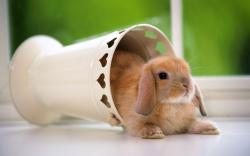 Wonderful Bunny Wallpaper