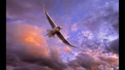 Wonderful-Flying-Bird- Nature-Wallpaper scene best HD