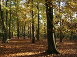 File:Woodland English Autumn Sunlit.JPG