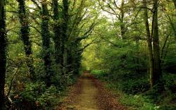 Woods Background 20380 1440x900 px