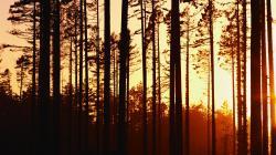 Woods Sunset Wallpaper