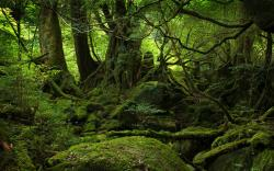 original wallpaper download: Yakushima Forest - 2560x1600