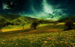 Yellow Flower Meadow