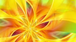 Wallpaper Yellow Flower Wallpaper: Yellow Flower Petals Wallpaper Abstract Wallpapers 1920x1080px