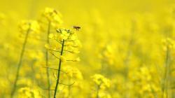 Yellow Flowers Wallpaper; Yellow Flowers Wallpaper ...