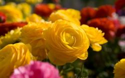 Beautiful Yellow Flowers 14147