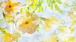 Description: The Wallpaper above is Yellow flowers sunshine hd Wallpaper in Resolution 1600x900. Choose your Resolution and Download Yellow flowers sunshine ...