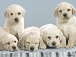 Nintendogs These Dogs Look Alot Like my Yellow Lab on my game!