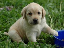 N.J.'s top dog: State's most popular breed is familiar furry favorite   NJ.com